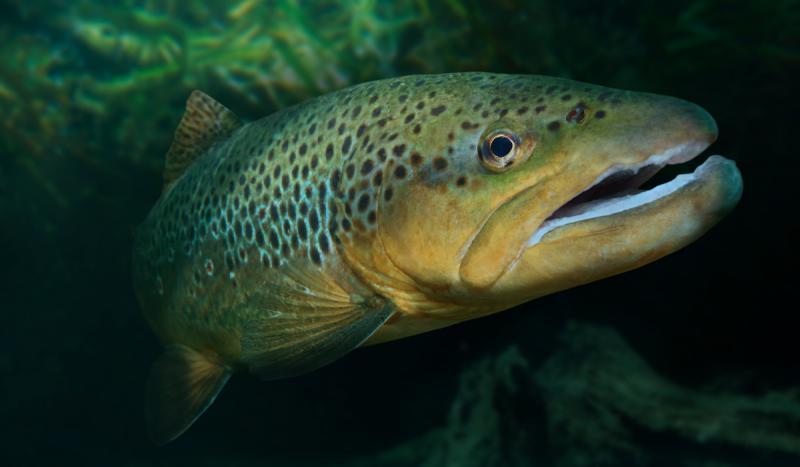 Fishangler Solunar 2