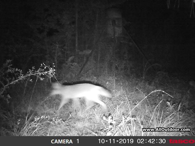 coyote-trail-camera