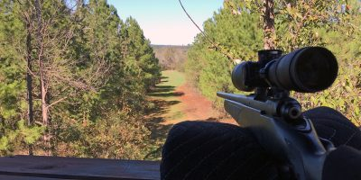 A great view from a Georgia deer stand.