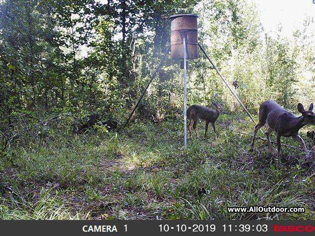 tacso-camera-deer