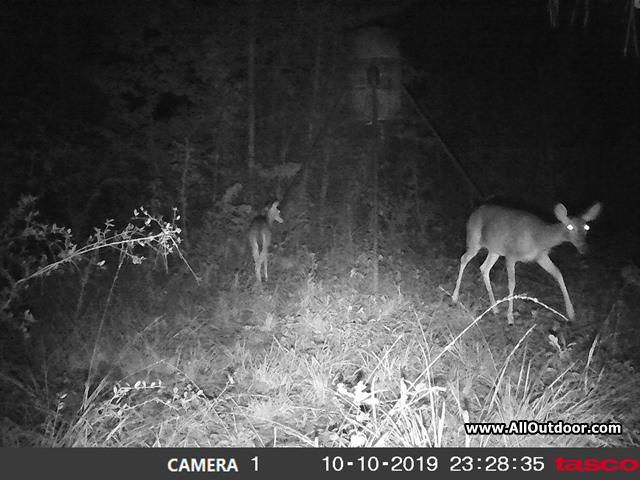 tasco-night-trail-camera
