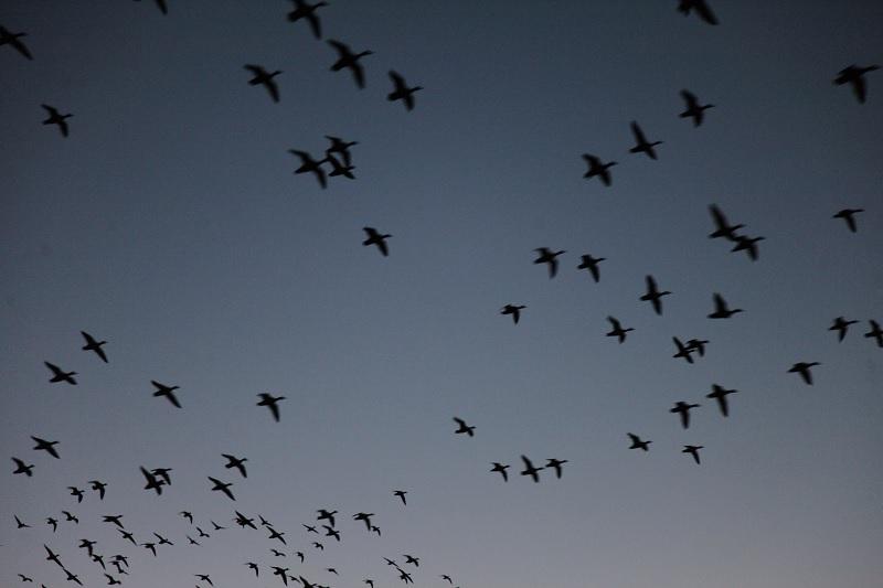 Migration Magic