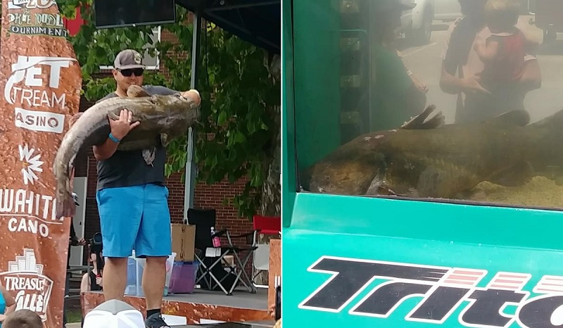 Noodles Record-Setting Catfish