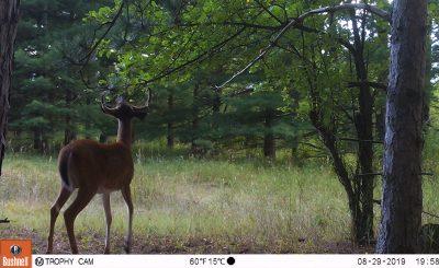 2019 Deer Season Outlook