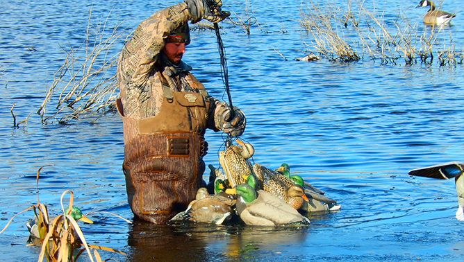 Hard-working waterfowl guides