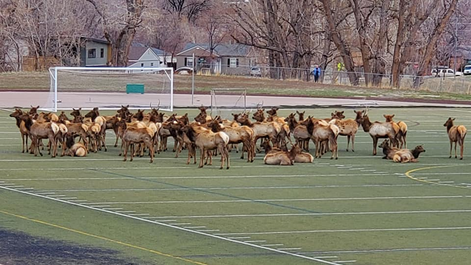 Elk Swarm Football Field